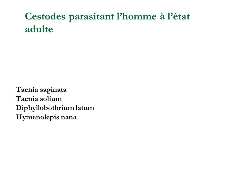 Taenia saginata Taenia solium Diphyllobothrium latum Hymenolepis nana