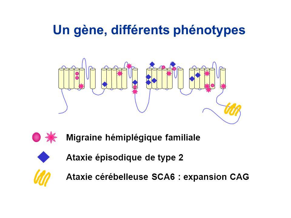 Un gène, différents phénotypes