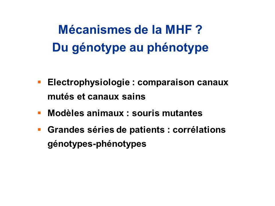 Mécanismes de la MHF Du génotype au phénotype