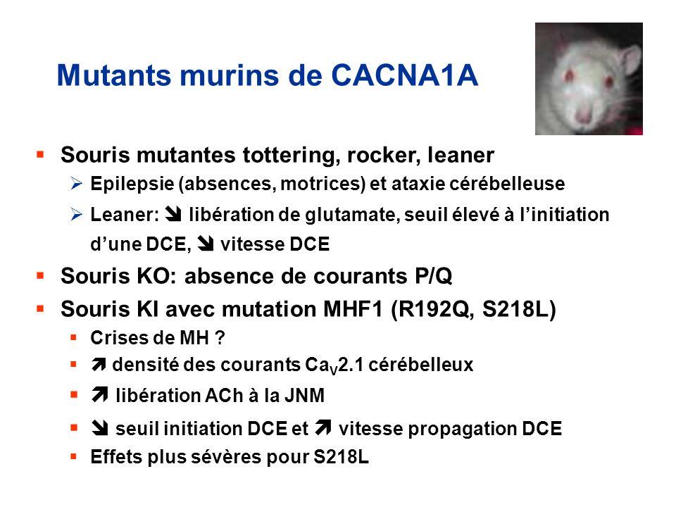 Mutants murins de CACNA1A