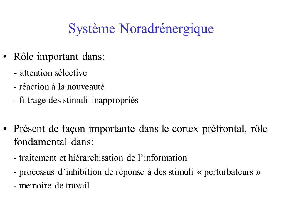 Système Noradrénergique