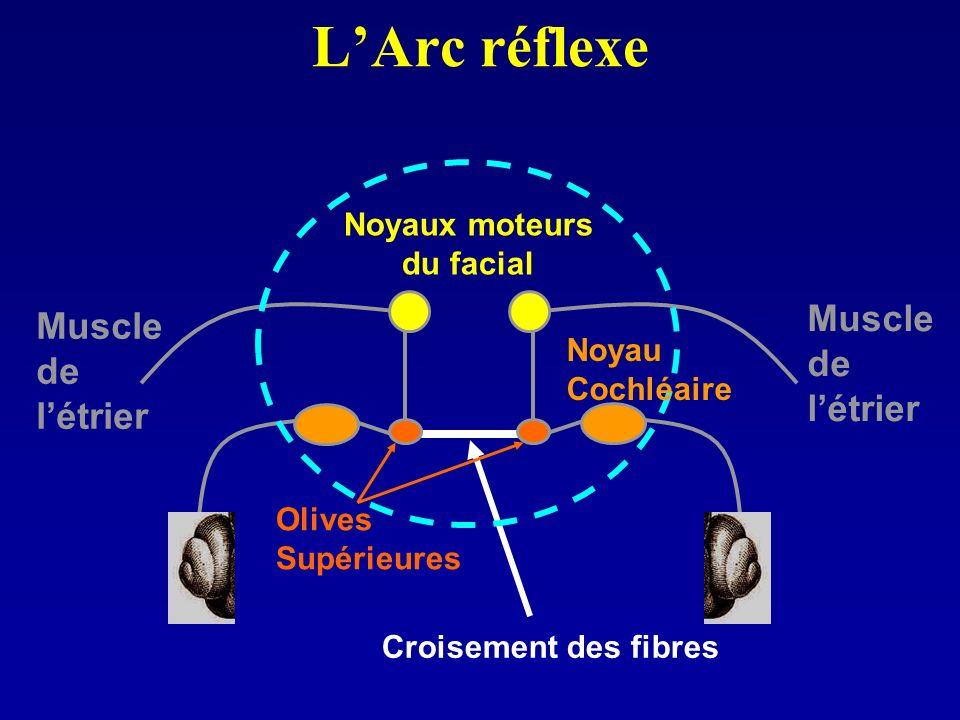 Noyaux moteurs du facial
