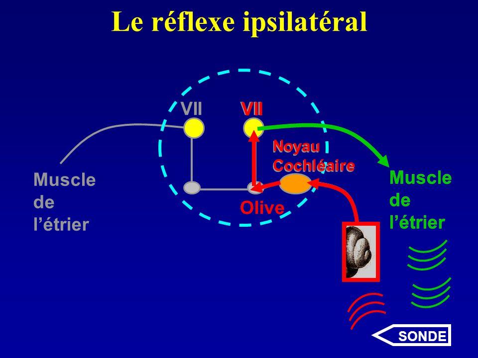 Le réflexe ipsilatéral