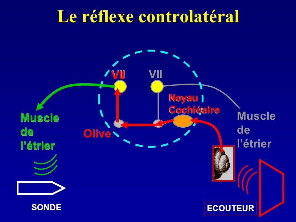 Le réflexe controlatéral