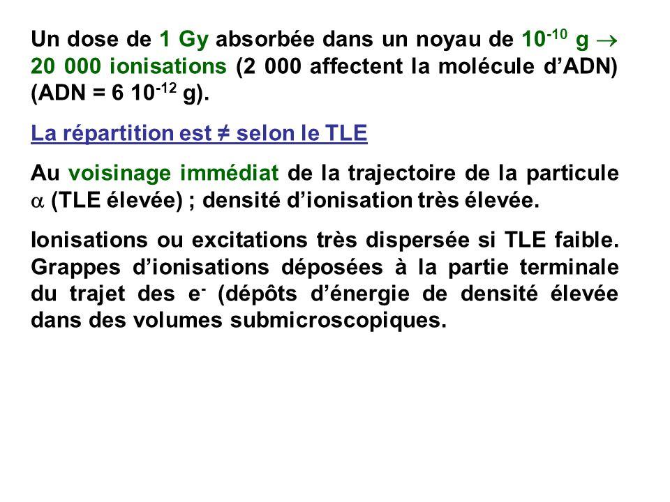 Un dose de 1 Gy absorbée dans un noyau de 10-10 g  20 000 ionisations (2 000 affectent la molécule d'ADN) (ADN = 6 10-12 g).