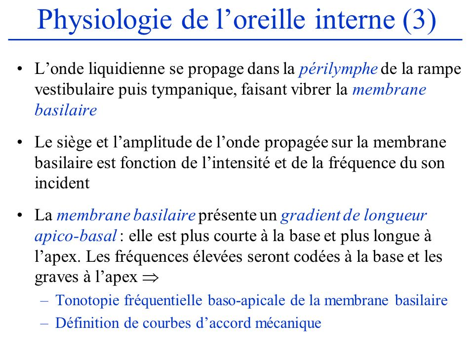 Physiologie de l'oreille interne (3)