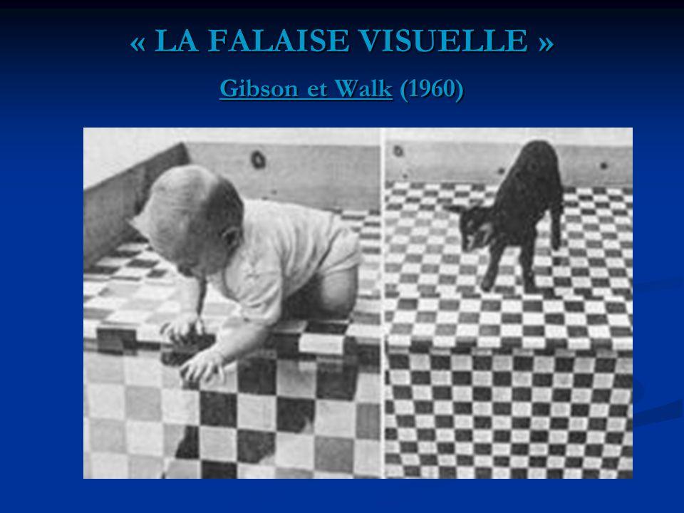 « LA FALAISE VISUELLE » Gibson et Walk (1960)