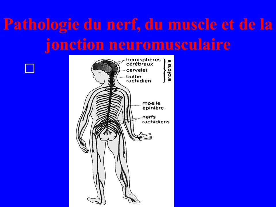Pathologie du nerf, du muscle et de la jonction neuromusculaire