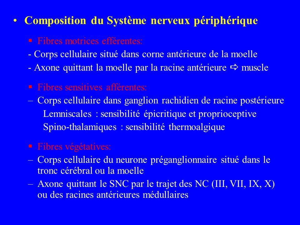 Composition du Système nerveux périphérique