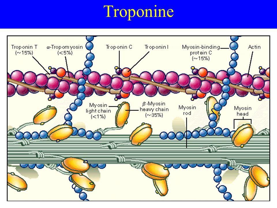 Troponine