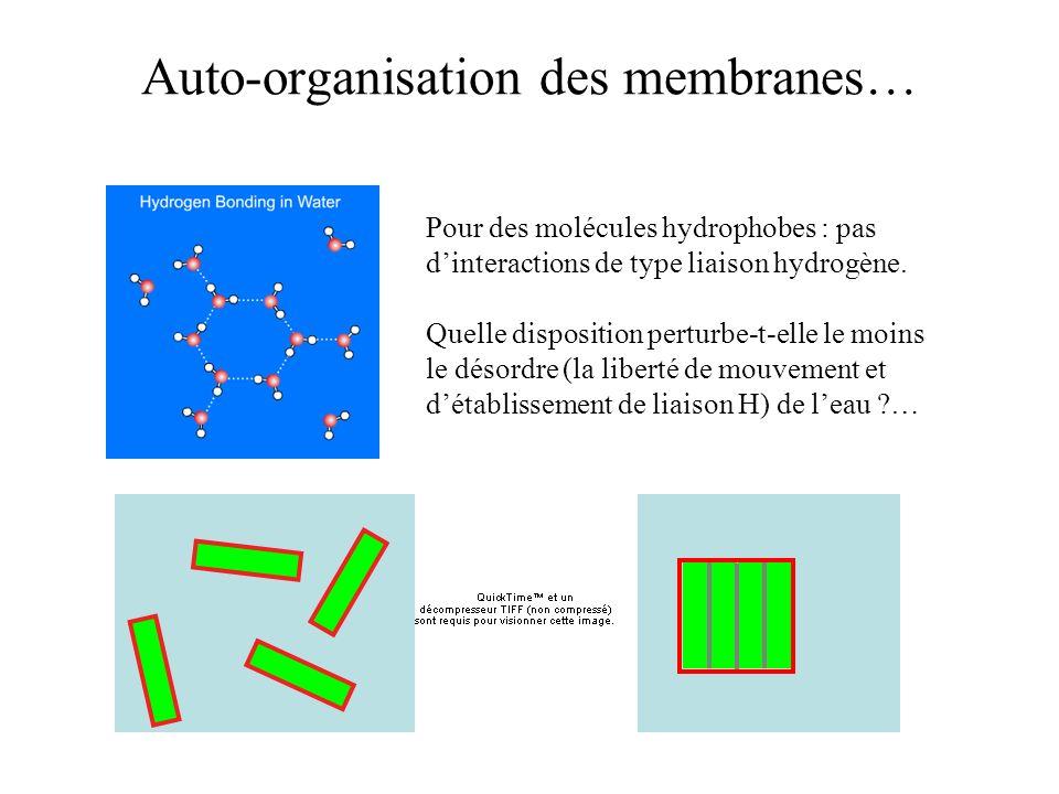 Auto-organisation des membranes…