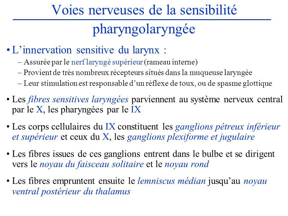 Voies nerveuses de la sensibilité pharyngolaryngée