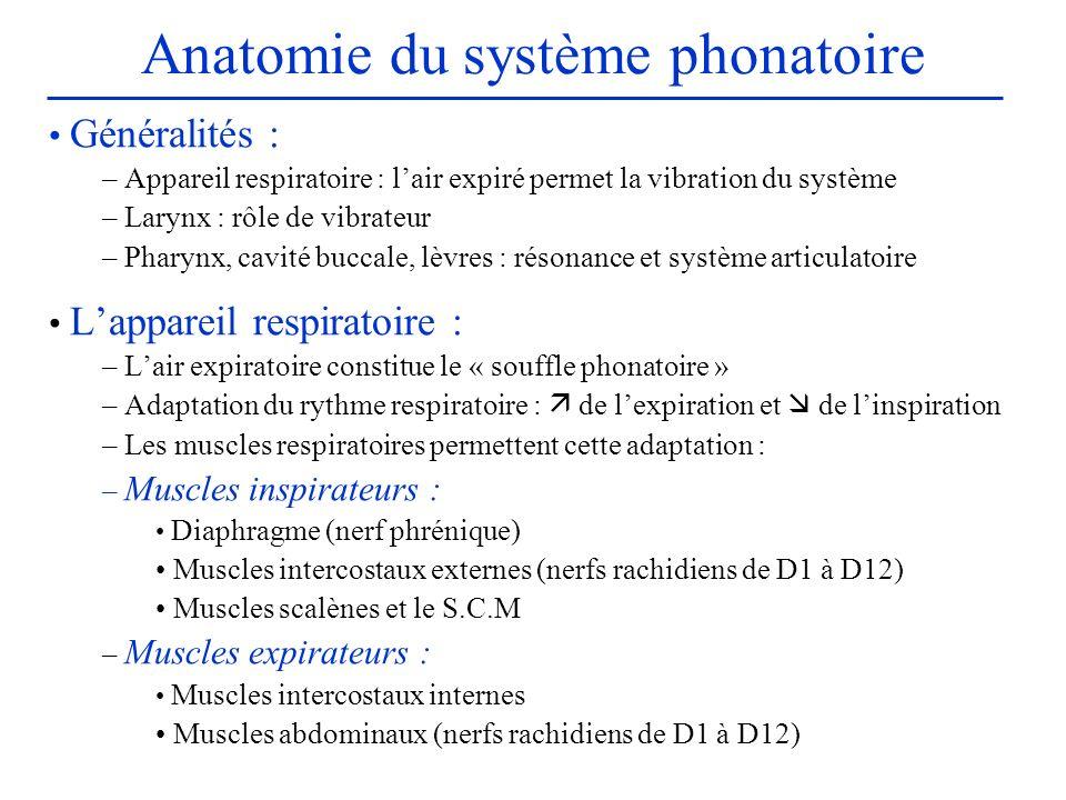 Anatomie du système phonatoire