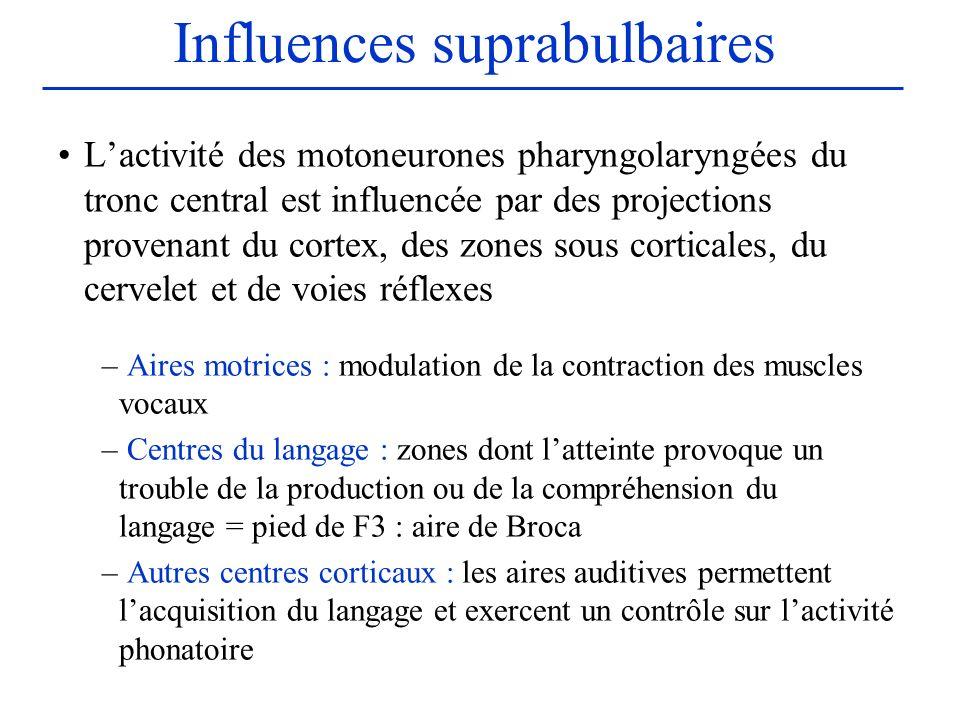 Influences suprabulbaires