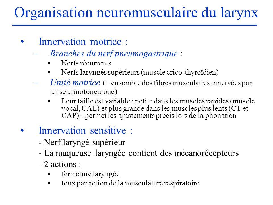 Organisation neuromusculaire du larynx