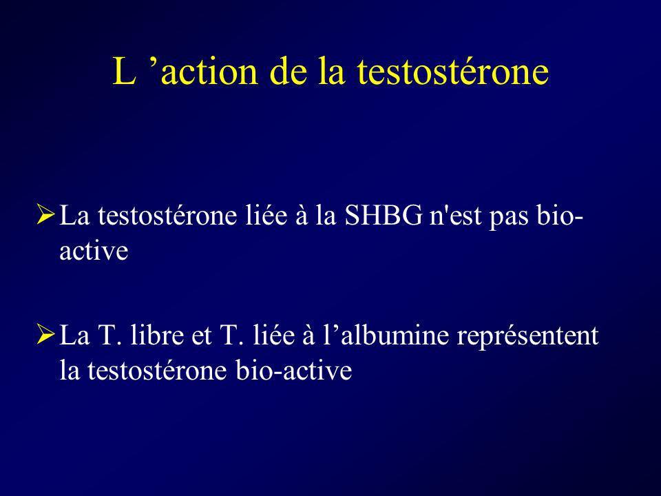 L 'action de la testostérone