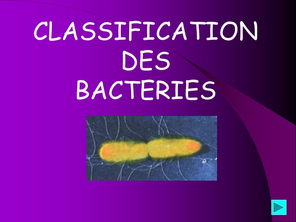 CLASSIFICATION DES BACTERIES