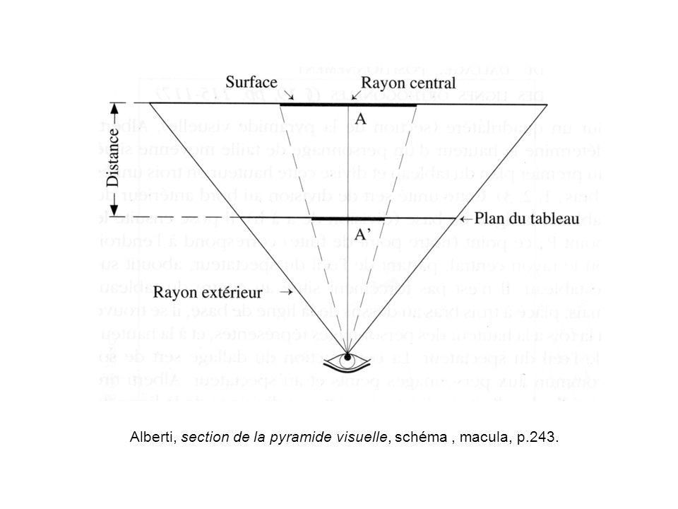 Alberti, section de la pyramide visuelle, schéma , macula, p.243.