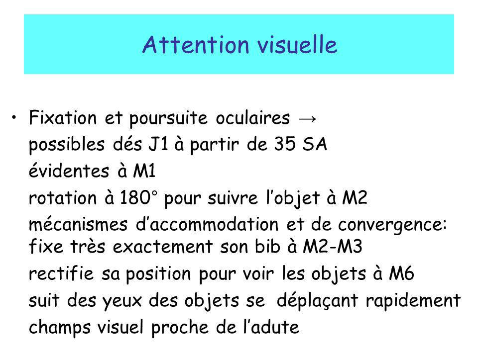 Attention visuelle Fixation et poursuite oculaires →
