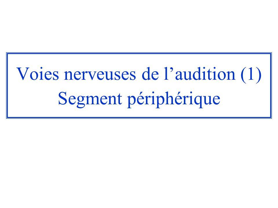 Voies nerveuses de l'audition (1) Segment périphérique