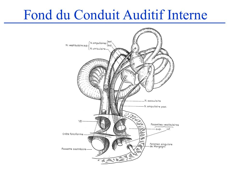 Fond du Conduit Auditif Interne