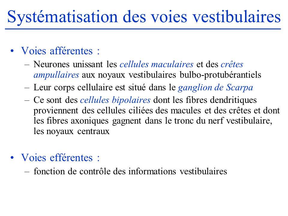Systématisation des voies vestibulaires