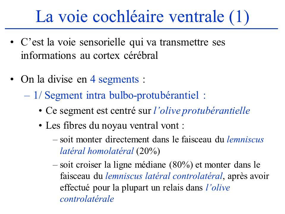 La voie cochléaire ventrale (1)