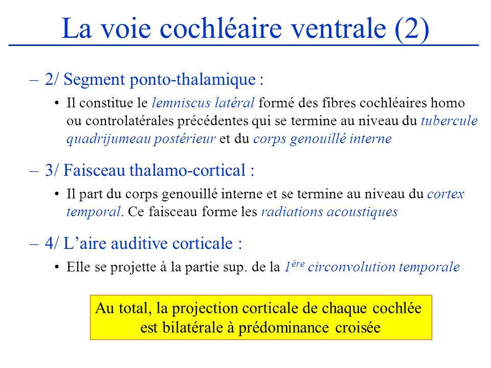 La voie cochléaire ventrale (2)