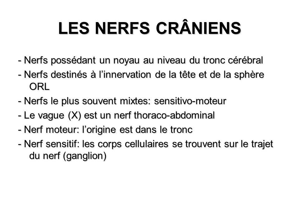 LES NERFS CRÂNIENS - Nerfs possédant un noyau au niveau du tronc cérébral. - Nerfs destinés à l'innervation de la tête et de la sphère ORL.