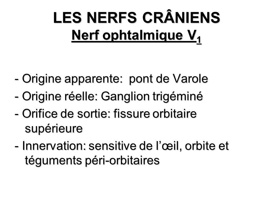 LES NERFS CRÂNIENS Nerf ophtalmique V1