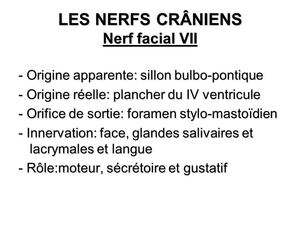 LES NERFS CRÂNIENS Nerf facial VII