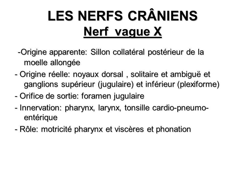 LES NERFS CRÂNIENS Nerf vague X