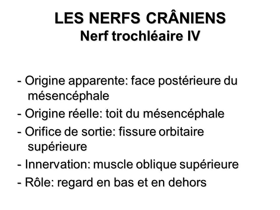 LES NERFS CRÂNIENS Nerf trochléaire IV