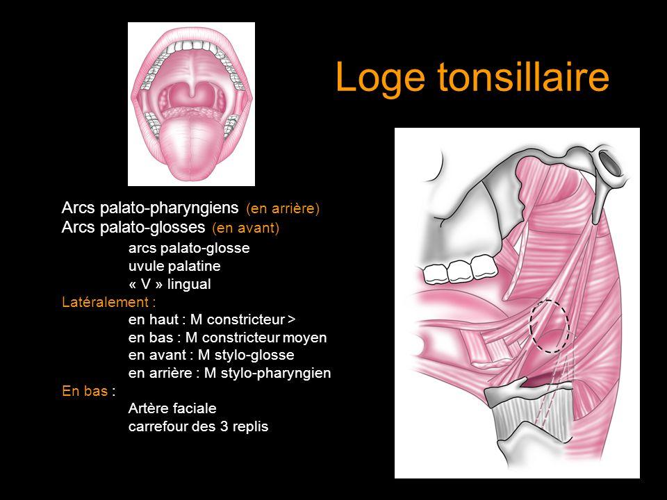 Loge tonsillaire Arcs palato-pharyngiens (en arrière)