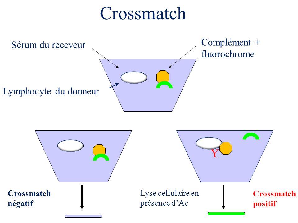 Crossmatch Y Complément + fluorochrome Sérum du receveur