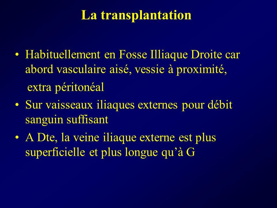 La transplantation Habituellement en Fosse Illiaque Droite car abord vasculaire aisé, vessie à proximité,