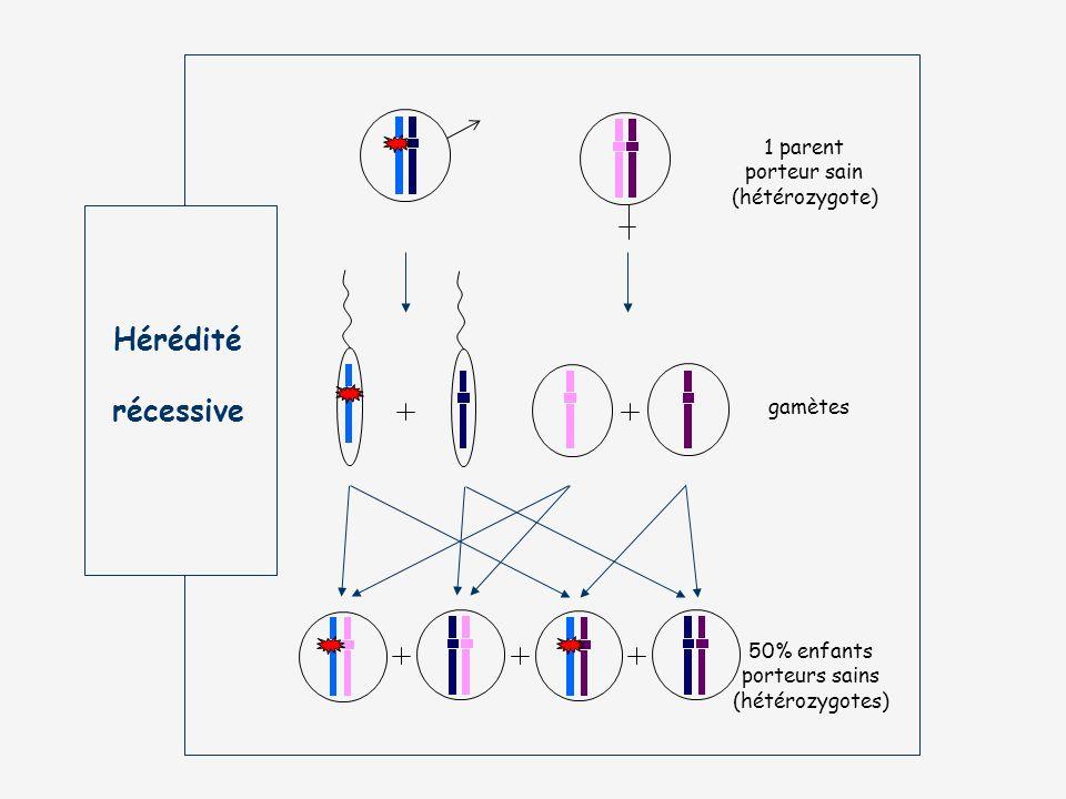 Hérédité récessive 1 parent porteur sain (hétérozygote) gamètes