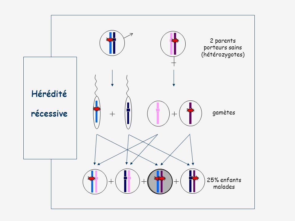 Hérédité récessive 2 parents porteurs sains (hétérozygotes) gamètes