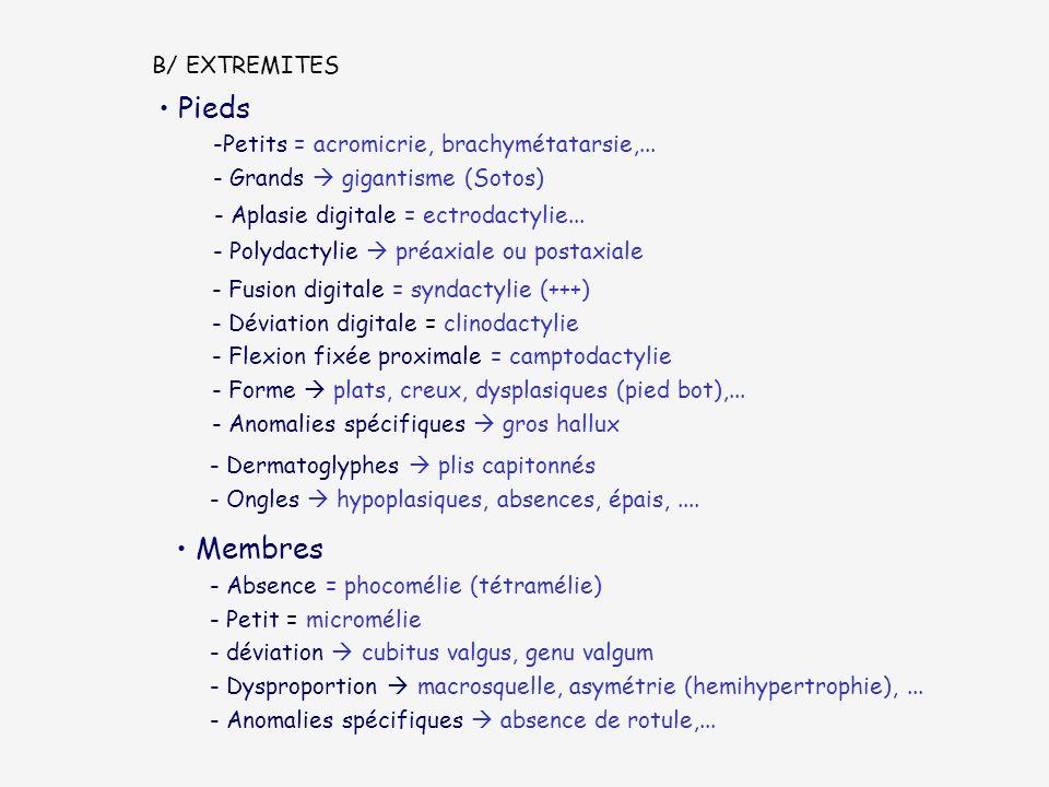 Pieds Membres B/ EXTREMITES Petits = acromicrie, brachymétatarsie,...