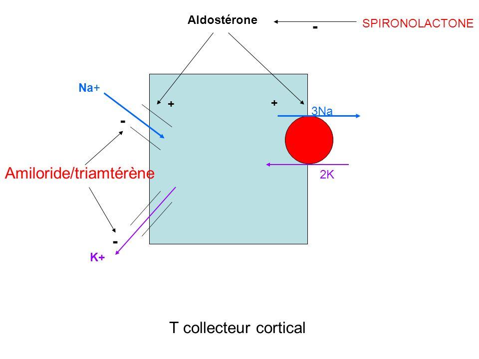 Amiloride/triamtérène