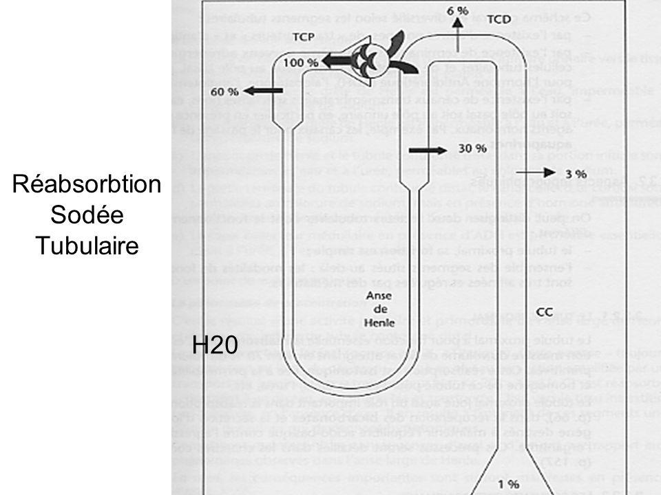 Réabsorbtion Sodée Tubulaire H20