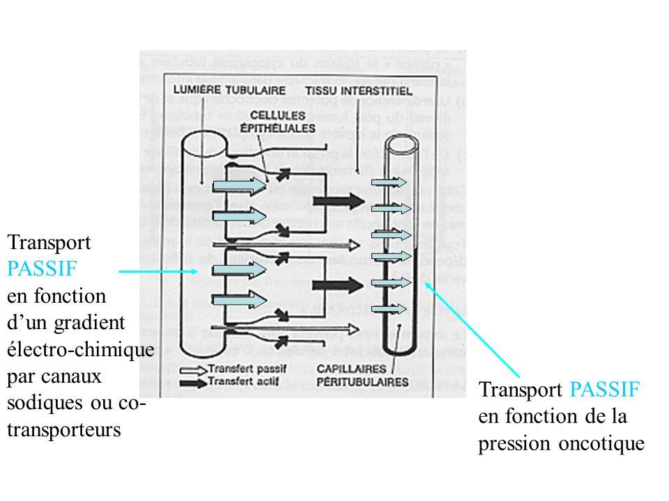 Transport PASSIF en fonction. d'un gradient. électro-chimique par canaux sodiques ou co-transporteurs.