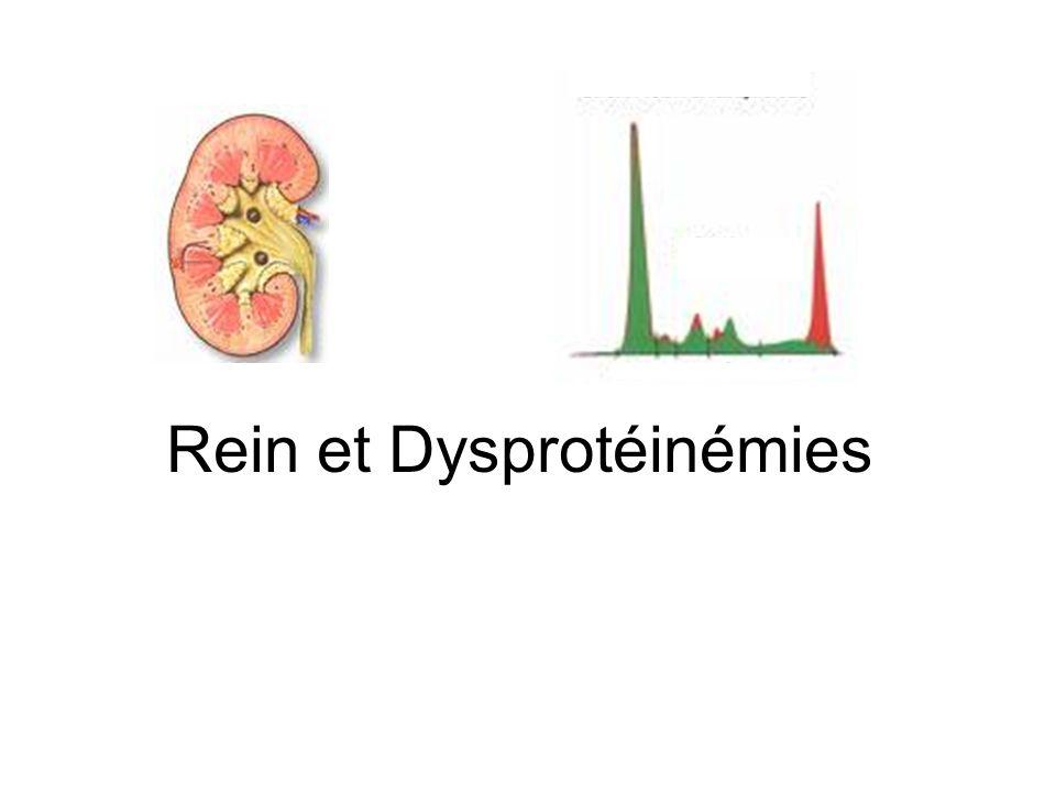 Rein et Dysprotéinémies