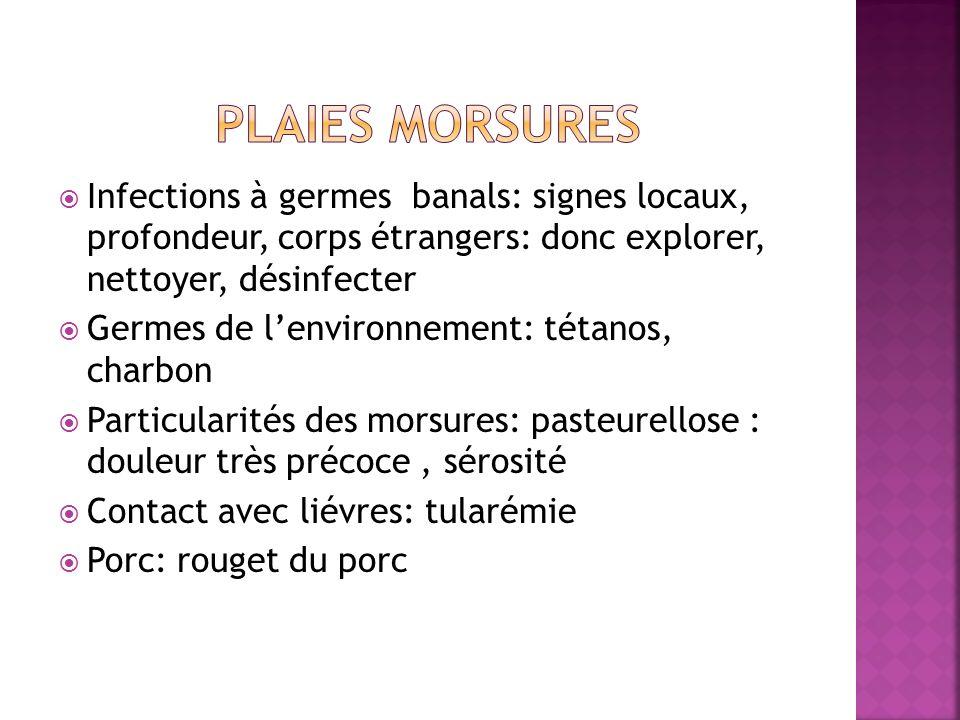 Plaies morsures Infections à germes banals: signes locaux, profondeur, corps étrangers: donc explorer, nettoyer, désinfecter.