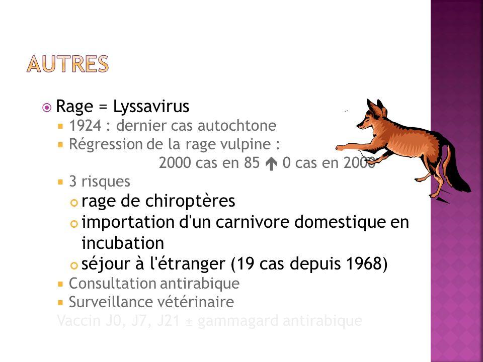 autres Rage = Lyssavirus rage de chiroptères