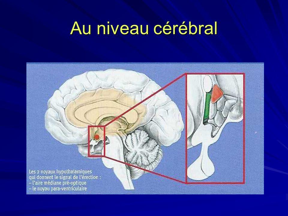 Au niveau cérébral