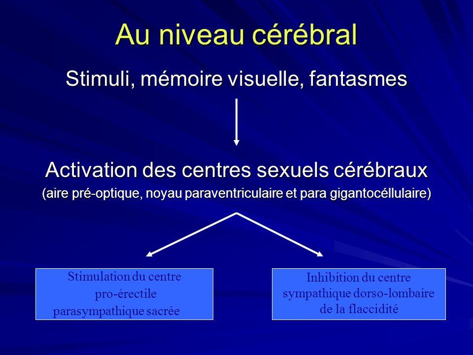 Au niveau cérébral Stimuli, mémoire visuelle, fantasmes