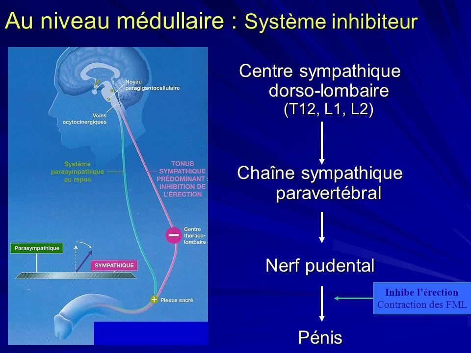 Au niveau médullaire : Système inhibiteur
