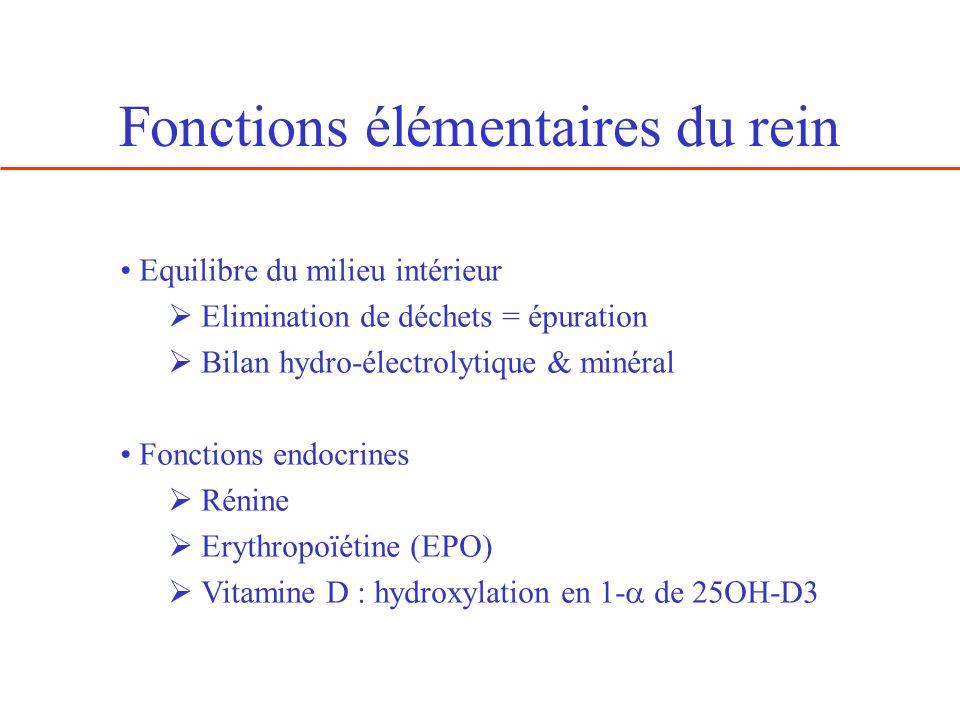 Fonctions élémentaires du rein