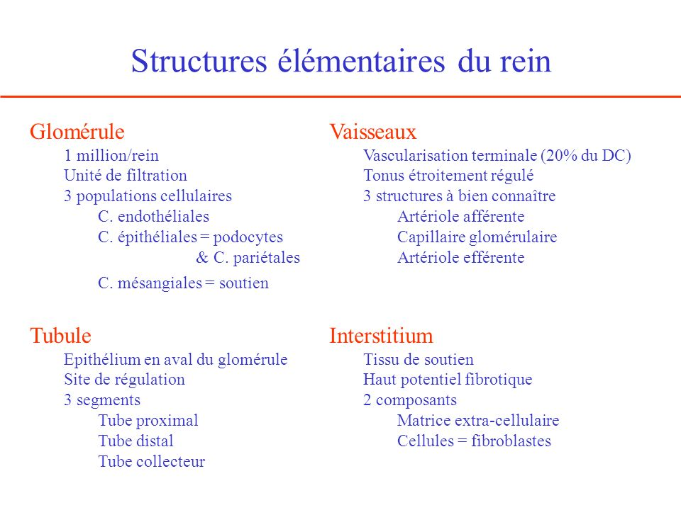 Structures élémentaires du rein